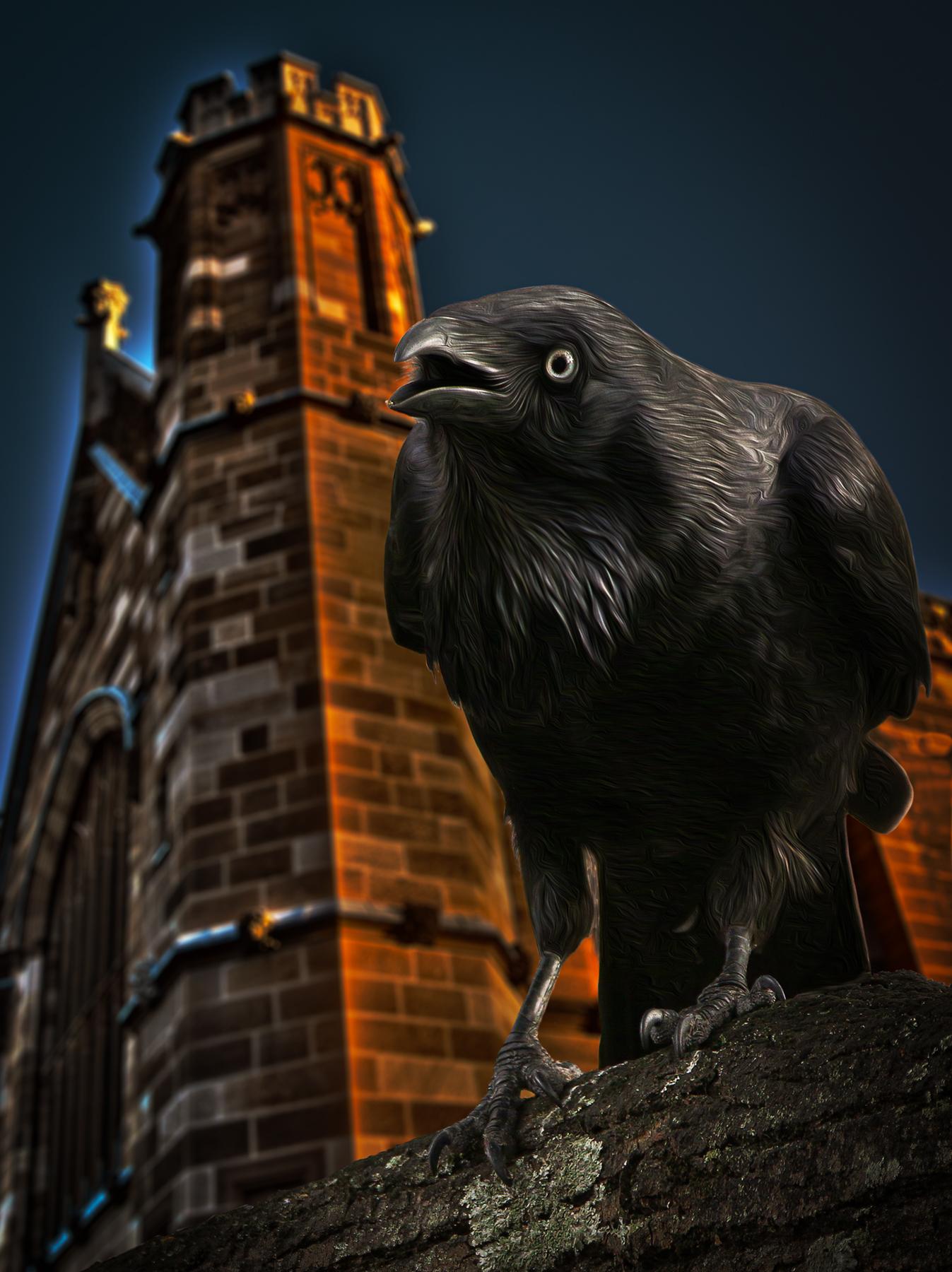 Australian Raven (Image ID 42033)