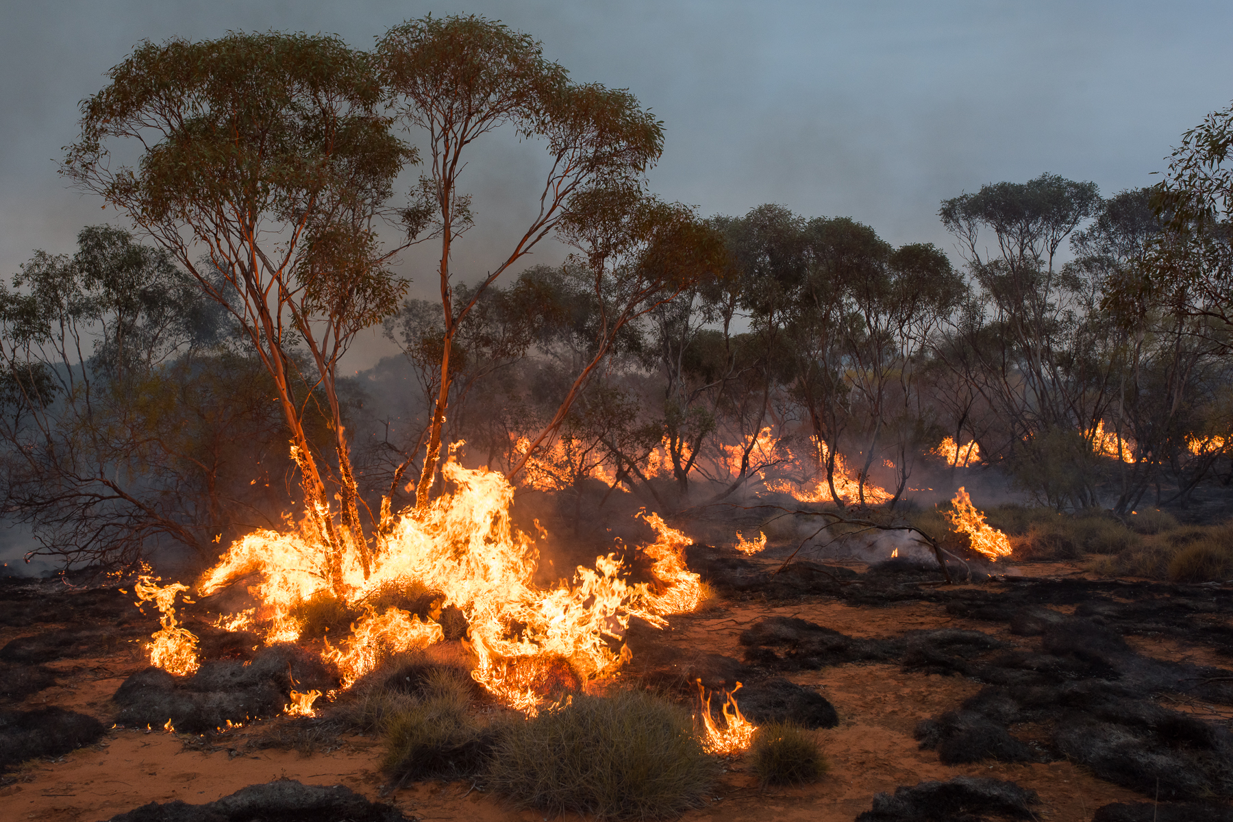 Mallee fire (Image ID 42225)