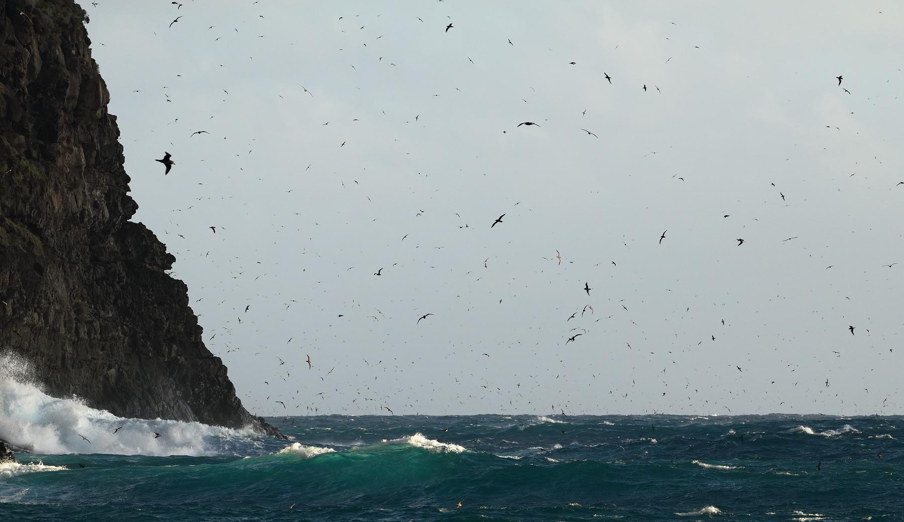 Little Island, below Mt Gower (Image ID 44546)