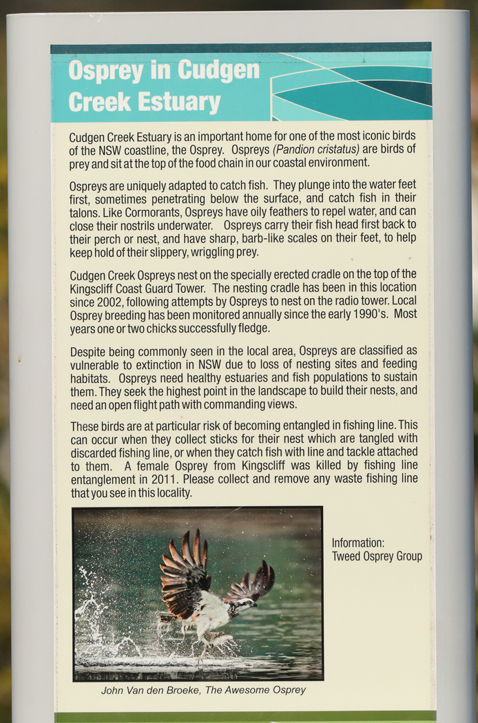Osprey (Image ID 33937)