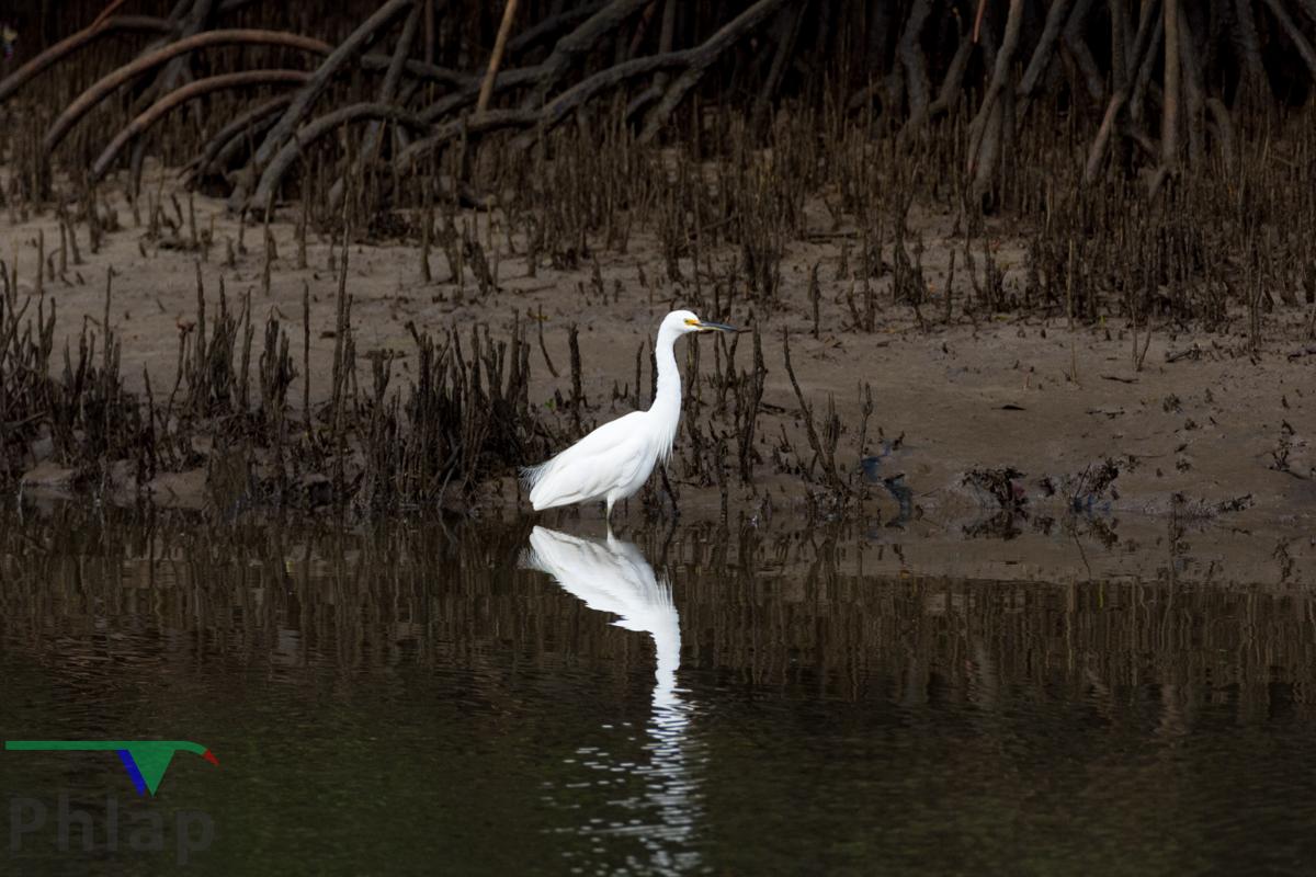 Little Egret (Image ID 35328)