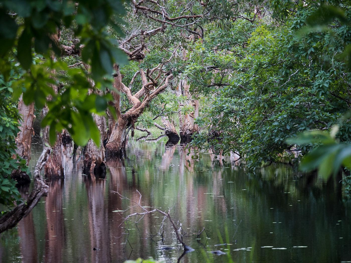 Alau Swamp (Image ID 35927)