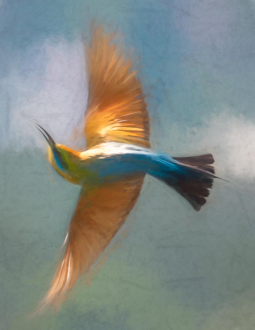 Rainbow Bee-eater (Image ID 37627)