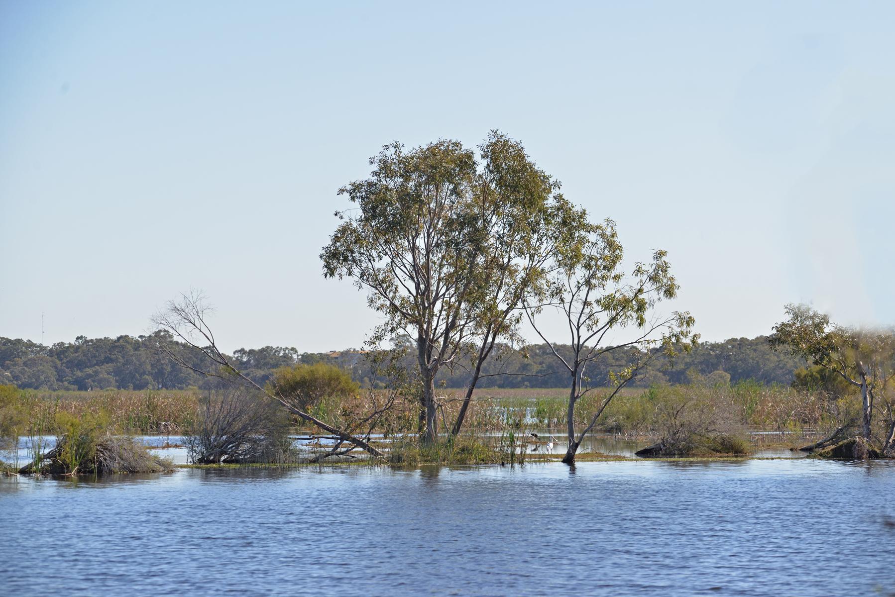 Herdsman Lake, Perth (Image ID 42358)