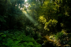 Brindle Creek (Image ID 37667)